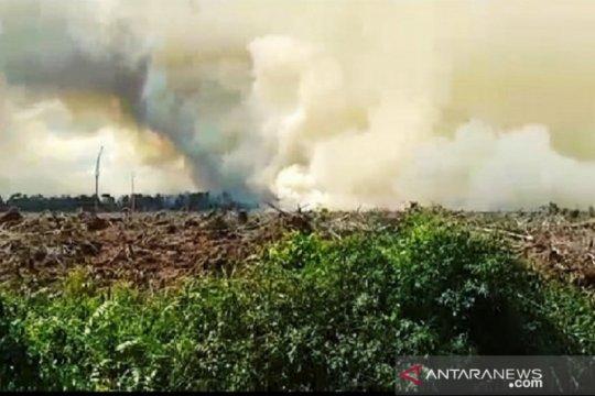 Polisi selidiki kebakaran lahan gambut di Pelalawan Riau