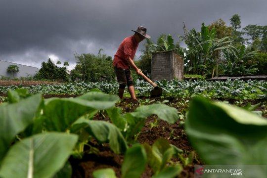 Anggota DPR soroti pola ekspor-impor buah sayur
