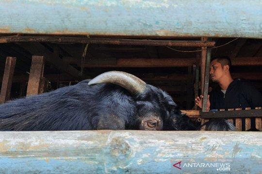 Permintaan hewan kurban di Jaksel mulai meningkat