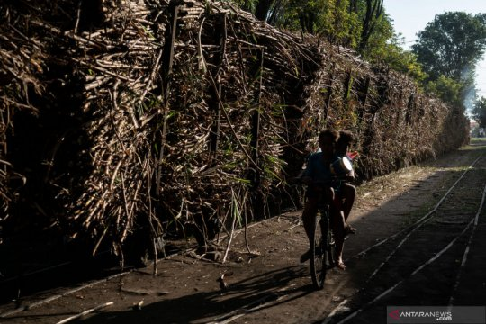 Tingkatkan luas tanam, PTPN targetkan produksi gula 2 juta ton
