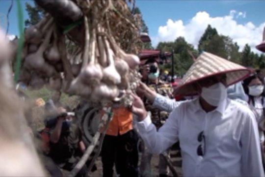 Sumut siapkan 6 kabupaten sebagai sentra bawang putih