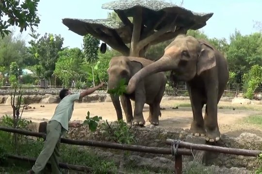 Kebun Binatang di Batang batasi jumlah pengunjung