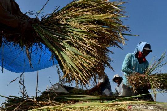 CIPS: Hambatan nontarif berpotensi ancam ketahanan pangan