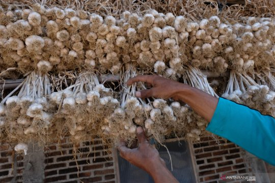 ASN Temanggung bantu serap bawang putih petani
