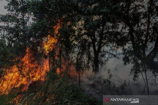 BMKG prediksi Riau alami puncak kemarau 2020 pada Juli dan Agustus