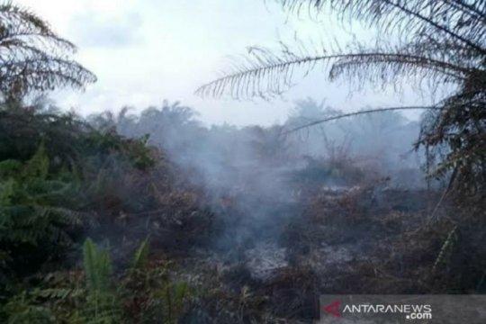 353 hektare hutan dan lahan hangus terbakar hingga Juni di Aceh