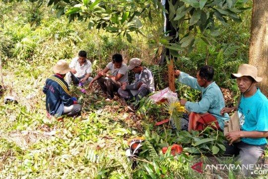 Kisah Misngadi bantu warga tanam nanas untuk cegah karhutla
