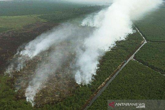 Kebakaran hutan dan lahan turun 81 persen pada November 2020