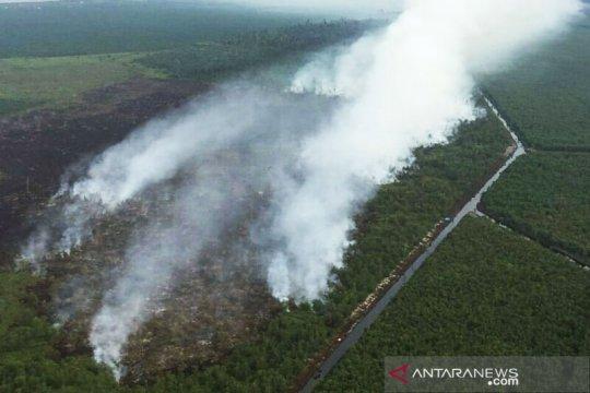 Delapan hektare lahan gambut terbakar di Bengkalis Riau