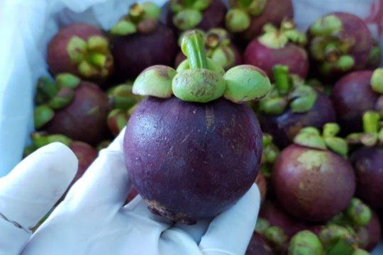 Karantina Pertanian fasilitasi Manggis Saburai masuk pasar ekspor