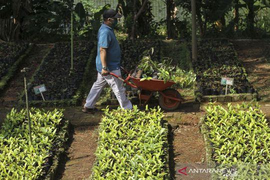 Kementerian LHK sediakan bibit pohon gratis untuk warga
