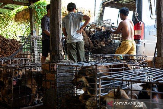 Siem Reap larang perdagangan daging anjing