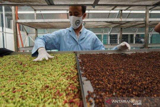 Pekalongan siap ekspor jamu ke mancanegara, di antaranya Tiongkok