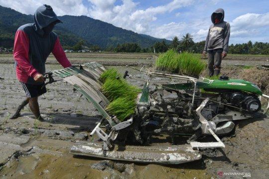 Peneliti: Diversifikasi salah satu instrumen capai ketahanan pangan