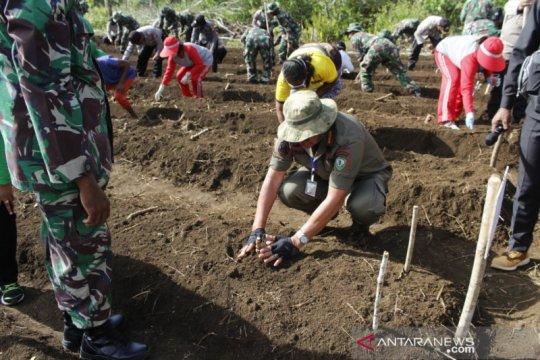 Maluku Tenggara tanami kebun desa jaga ketahanan pangan masa pandemi