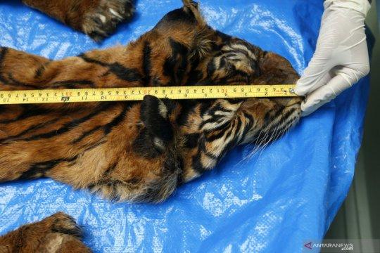 Identifikasi lanjutan barang bukti harimau sumatra