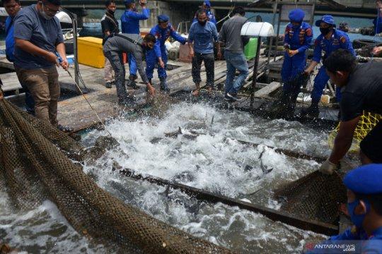 Menteri Edhy: KKP pastikan produksi perikanan bermutu tinggi