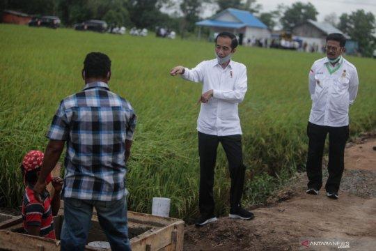 """Presiden Jokowi minta Kementan selesaikan """"food estate"""" tahun ini"""
