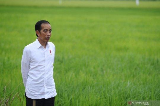 Presiden Jokowi instruksikan Kementan cari solusi atasi pangan impor
