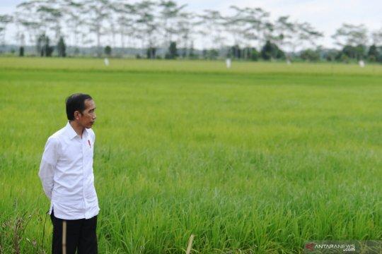 Presiden Jokowi : Pembangunan pertanian harus dalam skala yang luas
