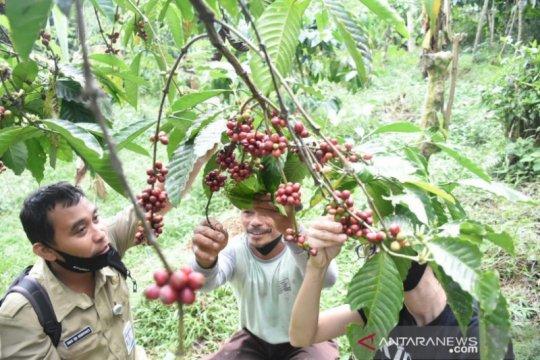 Produk kopi UMKM Batang tembus pasar Australia