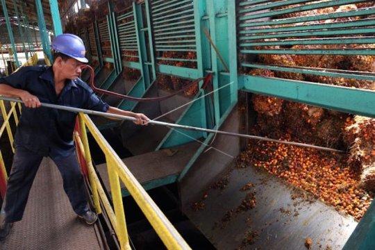 Ada pekerja positif COVID-19, Cargill tutup sementara pabrik sawitnya