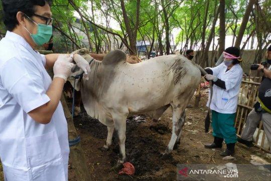 Wali kota minta pengelola penampungan hewan kurban jaga kebersihan