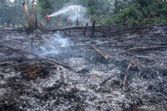 Polda Riau tetapkan Direktur PT DSI jadi tersangka karhutla