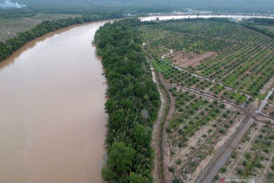3,3 juta hektare kebun kelapa sawit terindikasi ada di kawasan hutan