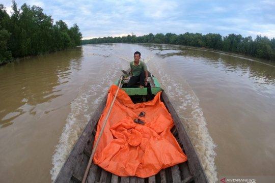 Mangrove, kelapa dan migrasi burung