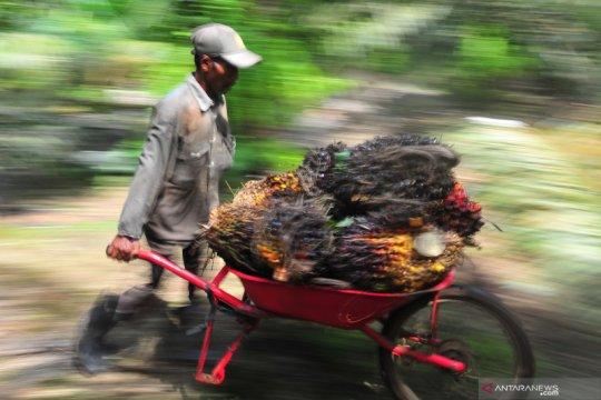 Ekonomi India dan China membaik picu kenaikan harga sawit Riau
