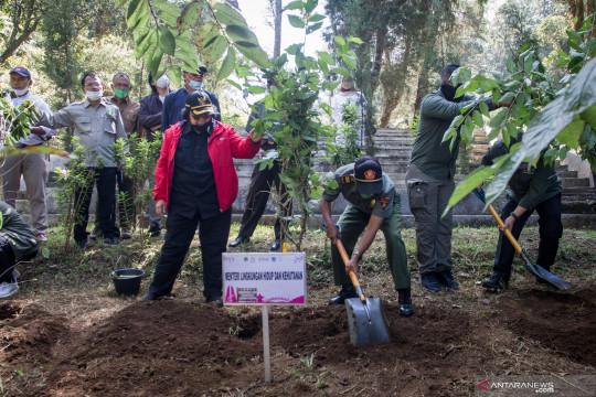 Perhutani siapkan 70 ribu hektare untuk hutan tanaman energi