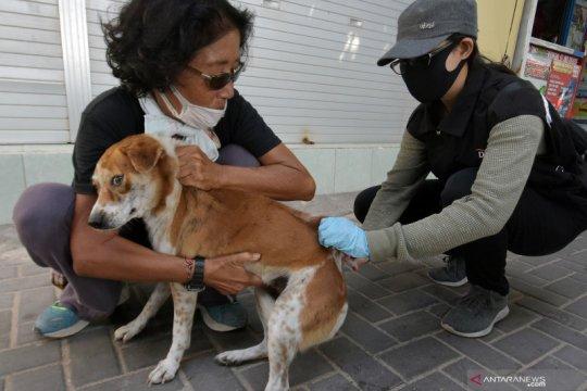 Di Bengkulu sebanyak 2.200 hewan divaksin rabies