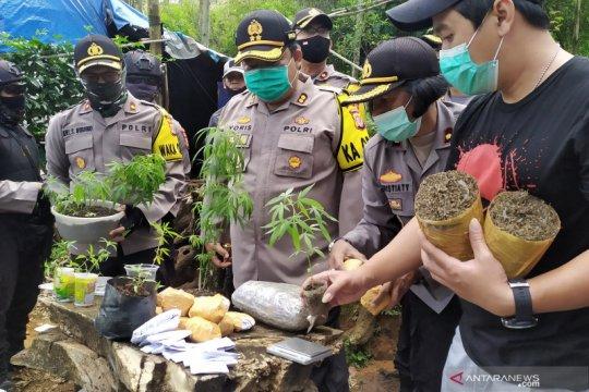 Satu hektar ladang tempat penanaman ganja di Bandung diungkap polisi
