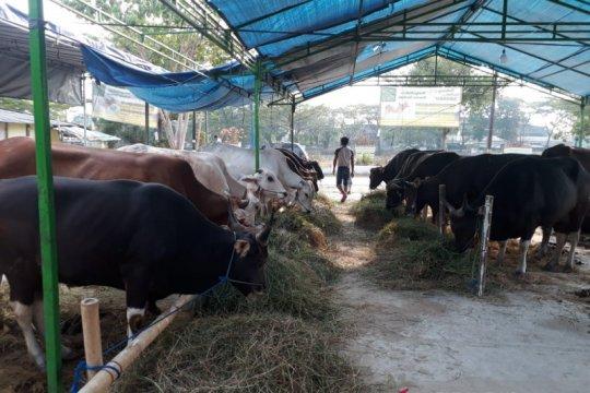 Pedagang hewan kurban khawatir fisik kambing lemah semasa pandemi