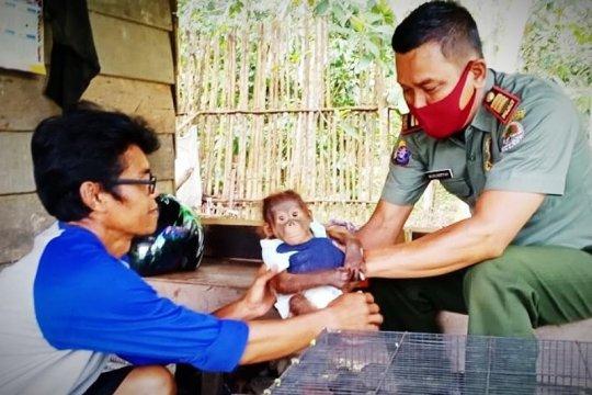 Pemancing temukan bayi orangutan di pinggir Sungai Mentaya Kalteng