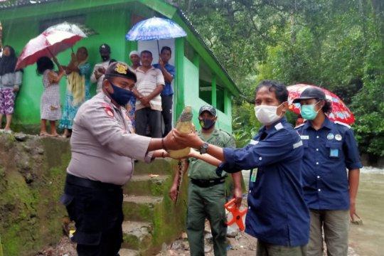 BKSDA Maluku terima buaya dari warga Larike