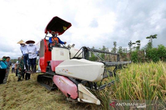 Banyuwangi surplus beras 126.831 ton