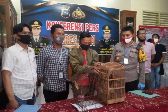 Guru honorer ditangkap polisi usai jual burung dilindungi via facebook