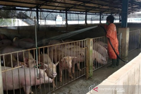BKP pastikan Kepri aman dari virus flu babi baru