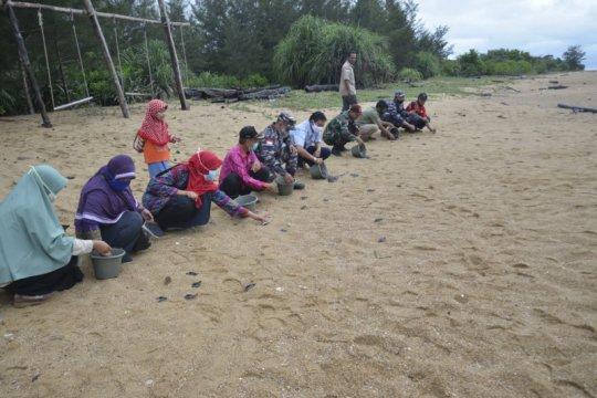 KKP lepasliarkan 300 tukik di pantai peneluran penyu terpanjang RI