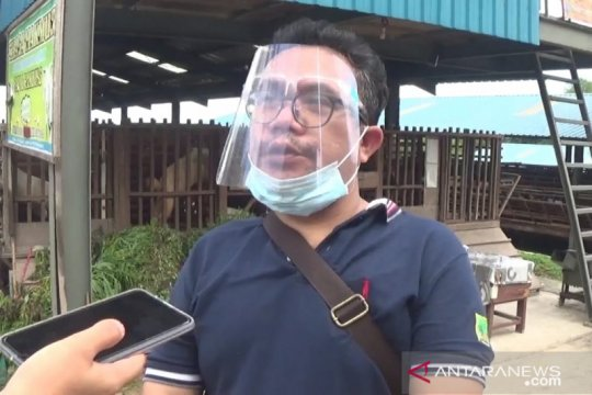 Pemkot Batam kontrol kesehatan babi di Pulau Bulan