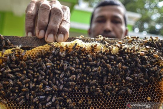 RS TNI AD Palangka Raya obati pasien COVID-19 juga gunakan madu murni