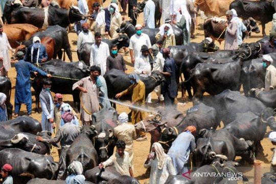 Begini suasana pasar hewan di Pakistan jelang Idul Adha