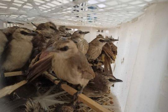 Karantina Pertanian amankan 998 ekor satwa ilegal dalam sepekan