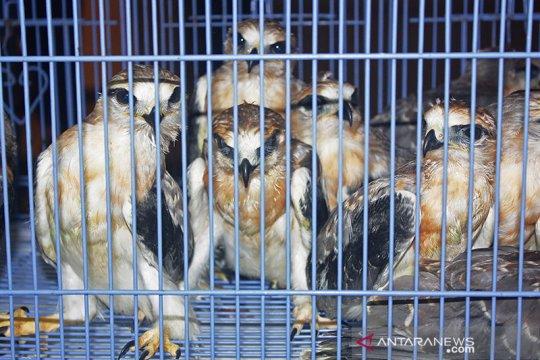 Aparat pemerintah gagalkan perdagangan ilegal 1.752 burung di Riau