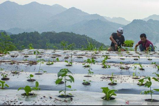 Anggota DPR: Sentuhan teknologi tingkatkan regenerasi petani