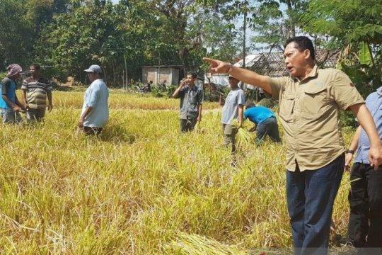 Bulog persiapkan lahan bangun gudang beras di lokasi lumbung pangan