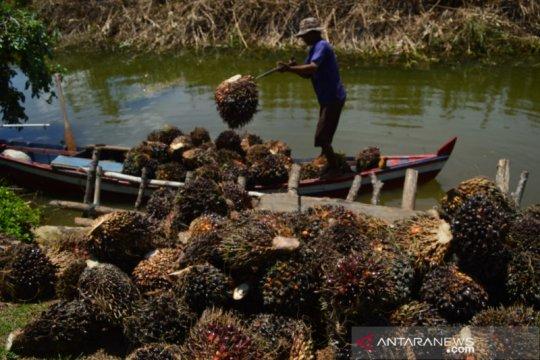 Anak petani sawit skala kecil rentan alami kemiskinan