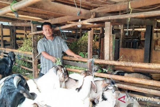 Penjual dan pemasok hewan kurban di Jaksel wajib kantongi CLM